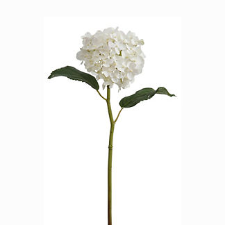 White Hydrangea 18