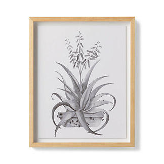 Watercolor Aloe Giclee Print III from the New York Botanical Garden Archives