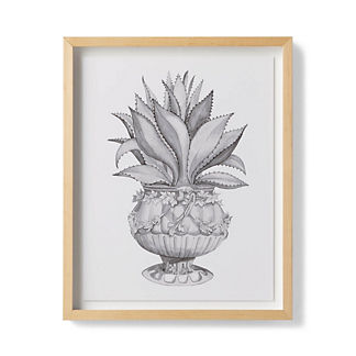Watercolor Aloe Giclee Print IV from the New York Botanical Garden Archives