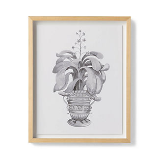 Watercolor Aloe Giclee Print I from the New York Botanical Garden Archives