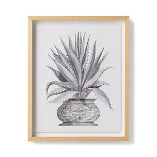 Watercolor Aloe Giclee Print V from the New York Botanical Garden Archives