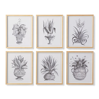 Watercolor Aloe Giclee Prints from the New York Botanical Garden Archives, Set of Six
