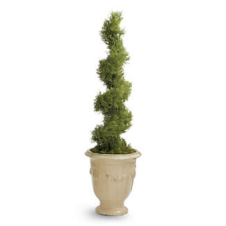 Cypress 5ft. Spiral Topiary