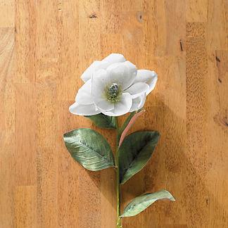 Snowy Magnolia 33