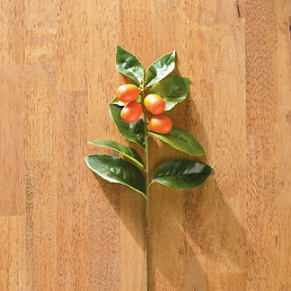 Berry and Bright Kumquat Stems, Set of Six
