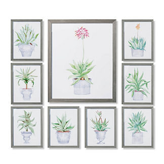 New York Botanical Garden Cachepot Aloe Giclee Prints, Set of Nine