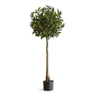 Outdoor 5' Viburnum Topiary