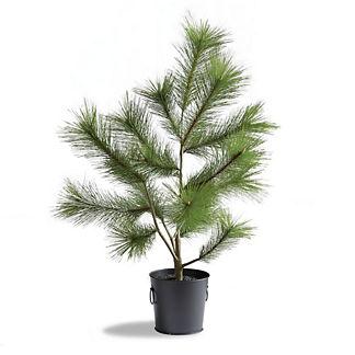 Outdoor 3 ft. Needle Pine Tree in Matte Black Pot