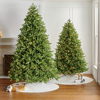 Balsam Fir Full Profile Tree