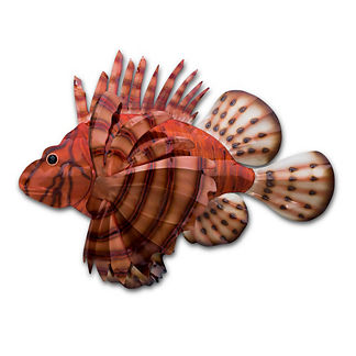 Firefish Wall Art