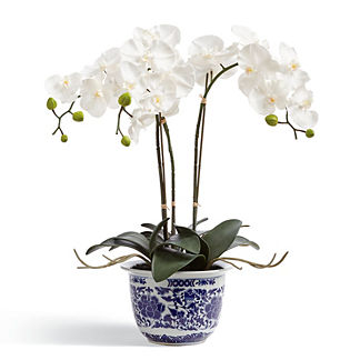 Orchid Potted Plant in Ming Vessel