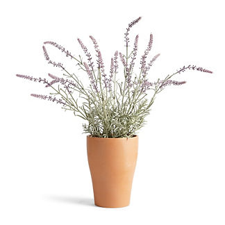 Outdoor Lavender Potted Plant