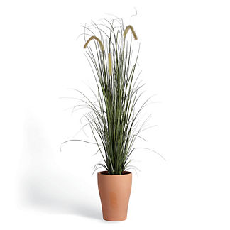 Outdoor Grass Potted Plant