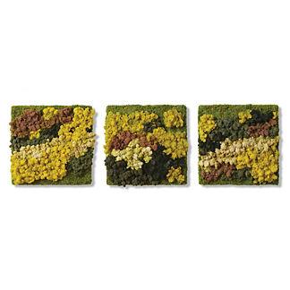 Moss Triptych