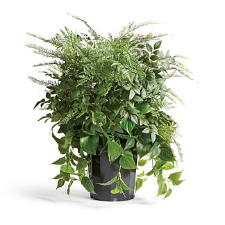 Outdoor Mixed Foliage Urn Filler