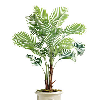 Outdoor Ornamental Palm Tree