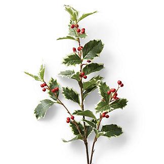 Holly Leaf Berry Stem, Set of Six