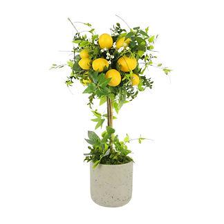 Lemon Topiary Arrangement