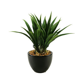 Green Lily Grass in Ceramic Bowl