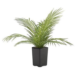 Areca Palm Fronds in Ceramic Planter