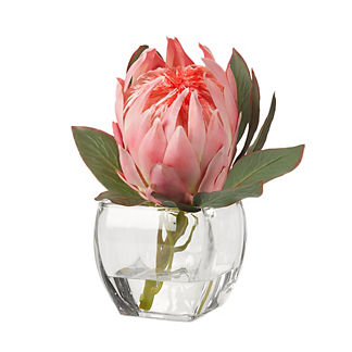 Pink Queen Protea in Glass Cube