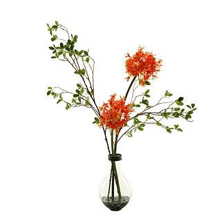 Orange Star Fire Alliums in Glass Vase