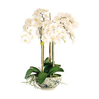 Phalaenopsis in Rose Trellis Vase