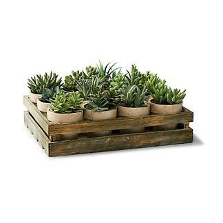 Mixed Succulent Crate