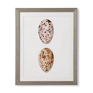 Speckled Eggs Giclee Print I