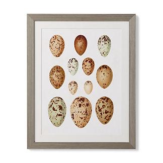 Egg Study Giclee Print II