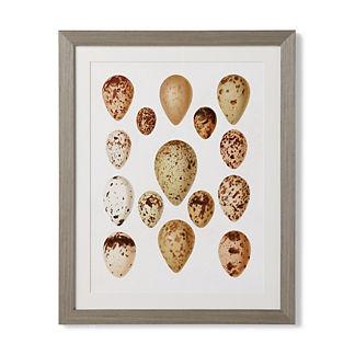 Egg Study Giclee Print I