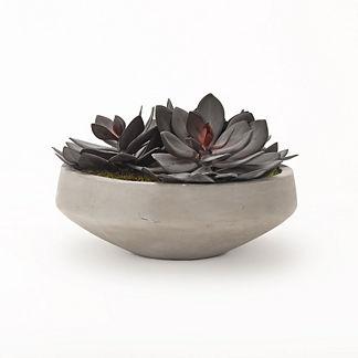 Echeveria Succulent Bowl