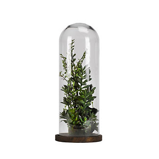 Succulents and Greenery Under Glass Dome