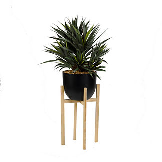 Star Succulent Plant with Wood Stand