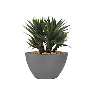 Star Succulent Plant in Grey Planter