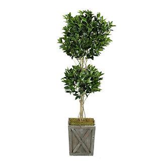 Shikaba Topiary Plant