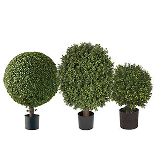 Single Ball Outdoor Boxwood Topiary