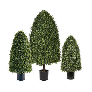 Rounded Cone Outdoor Boxwood Topiary