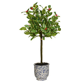 Rounded Holly in Ceramic Pot