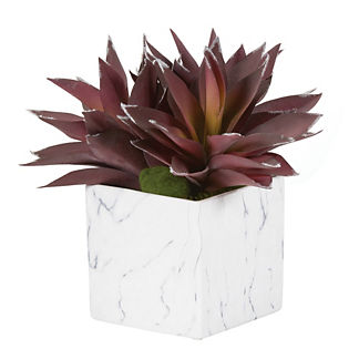 Purple Aloe Plants in Marble Ceramic