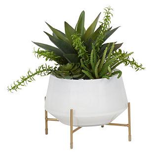 Aloe and Succulents in Ceramic Bowl