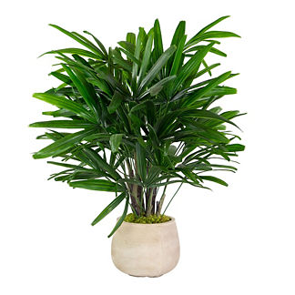 Rhapis Palm in Stonecast Planter