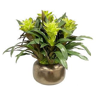 Bromeliad in Artisanal Pot