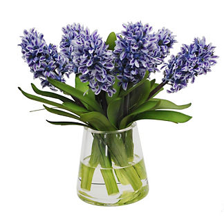 Blue Hyacinth in Glass
