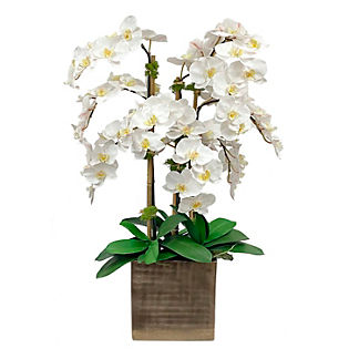 White Orchid in Rectangular Antiqued Vase