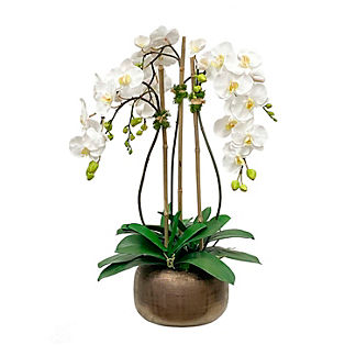 White Orchid In Antique Pot