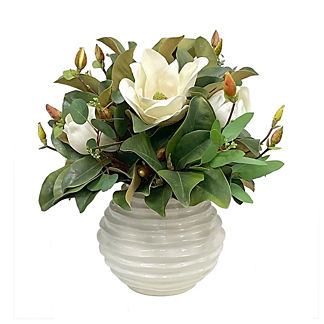 White Magnolia in Beehive Pot