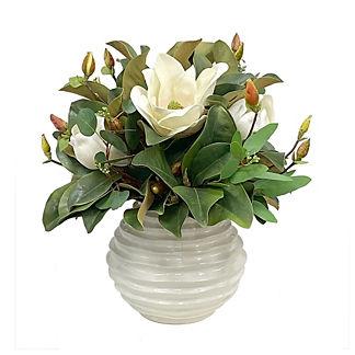 White Magnolia in Beehive Pot