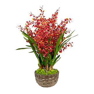 Dancing Orchid in Bowl