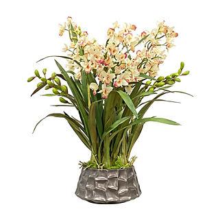 Dendrobium Orchid in Pot